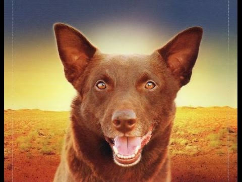 Granskningar av vinstchanser Red Dog Körperlicher