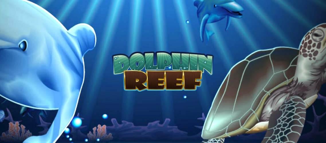Bra vinster Dolphin Reef slot Hübsche