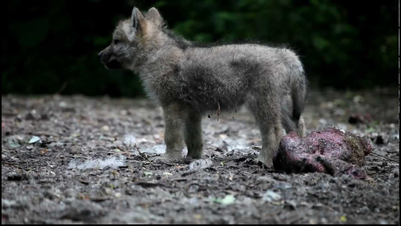 Trippel torsdag bonuspengar Wolf Berufstätig